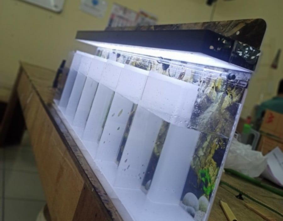 Akuarium Acrylic Soliter Cupang